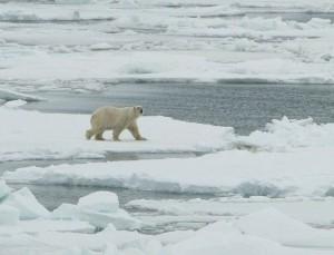 CLimateVariables-polar-bear