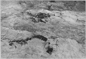 Source: http://commons.wikimedia.org/wiki/File:Dinosaur_fossil_-_NARA_-_286019.tif?uselang=en-gb